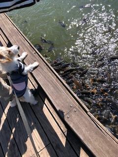 鯉とにいな.jpeg